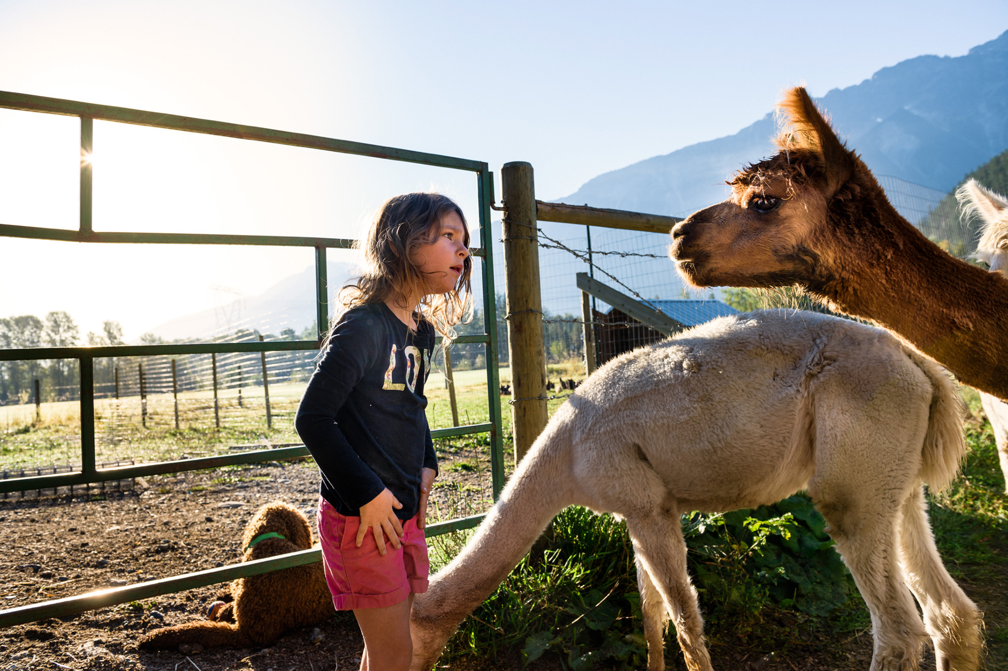 Photo of child staring eye to eye with llama.