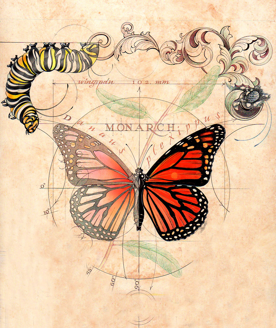conceptual illustration of butterfly life cycle.