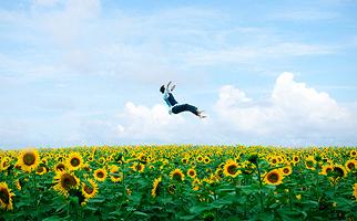 Man falling into field of sunflowers.