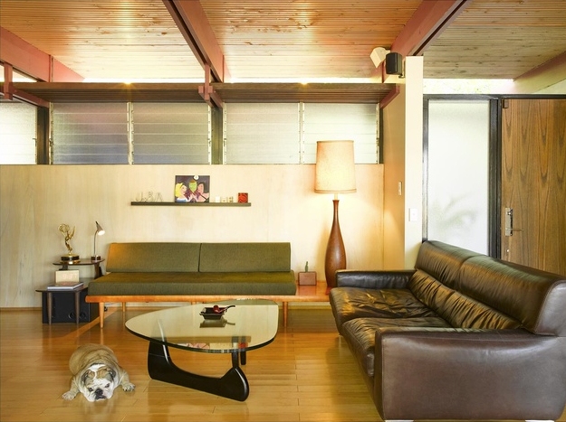 Bull dog in modern interior