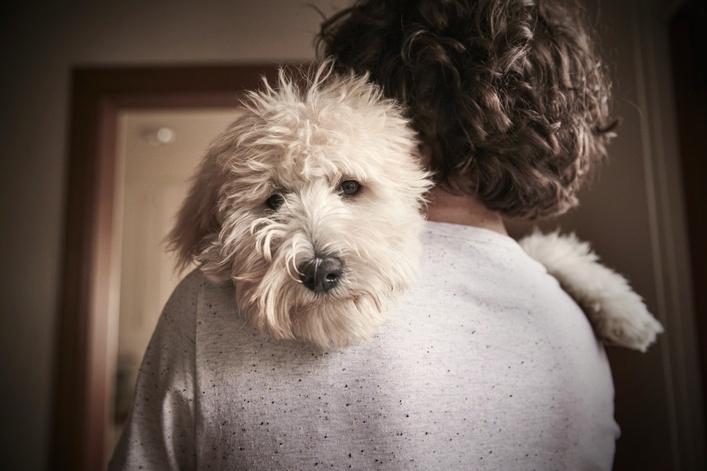 Dog on man's shoulder