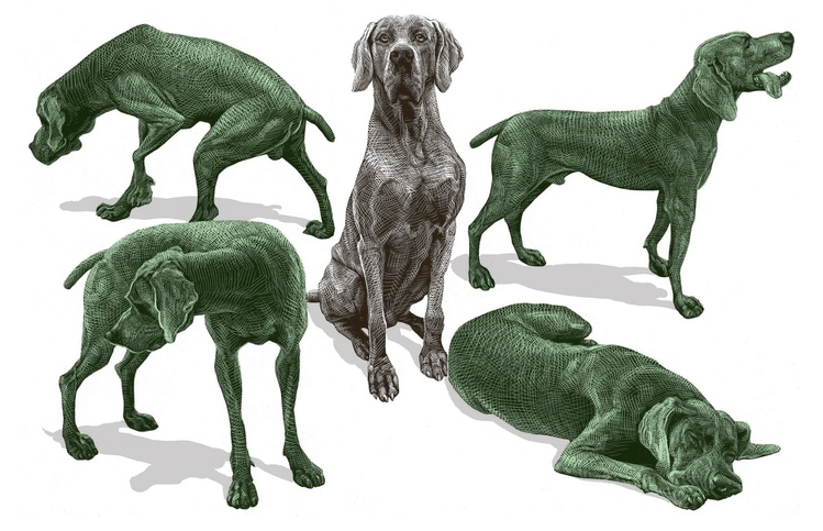 dog in five poses