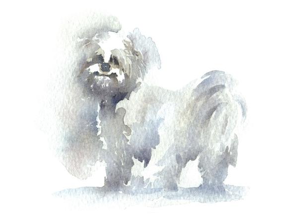 small dog watercolor