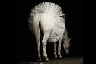 Horse wearing tutu.