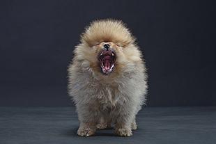 Photo of puppy.