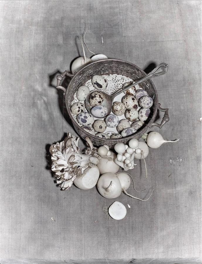 Still life mushrooms turnips